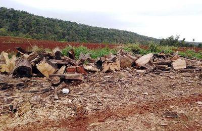 Parque Jaku'i enfrenta deforestación y en Otaño reclaman su protección