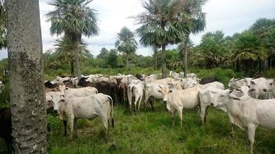 Carne paraguaya a China: Grito en el desierto del productor y nones blindados del Gobierno