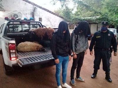 Detienen a jóvenes por robo de ovejas a un comisario