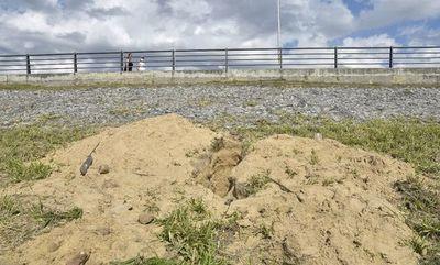 """Policía se desmarca de destrucción de nidos: """"No tenemos personal para nidos de lechuza"""""""