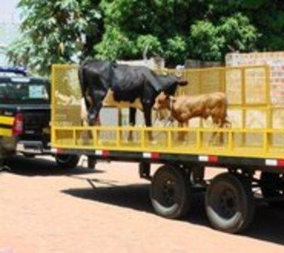 Inician controles en ruta por animales sueltos