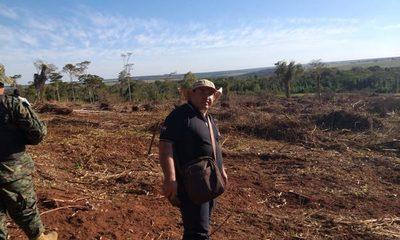 Allanan inmuebles por tala ilegal de árboles