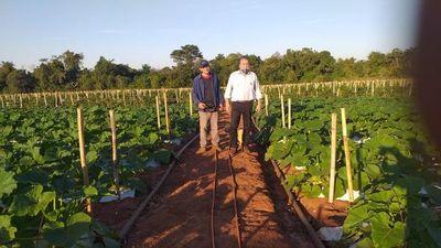 Productores denuncian ingreso de tomate de contrabando