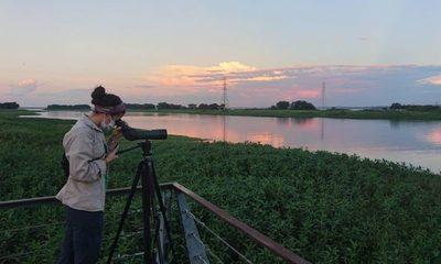 Técnicos de ITAIPU registran al vencejo de cascada, añuma y otras emblemáticas aves durante censo